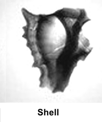 X-Ray-Image-Shell_02.jpg